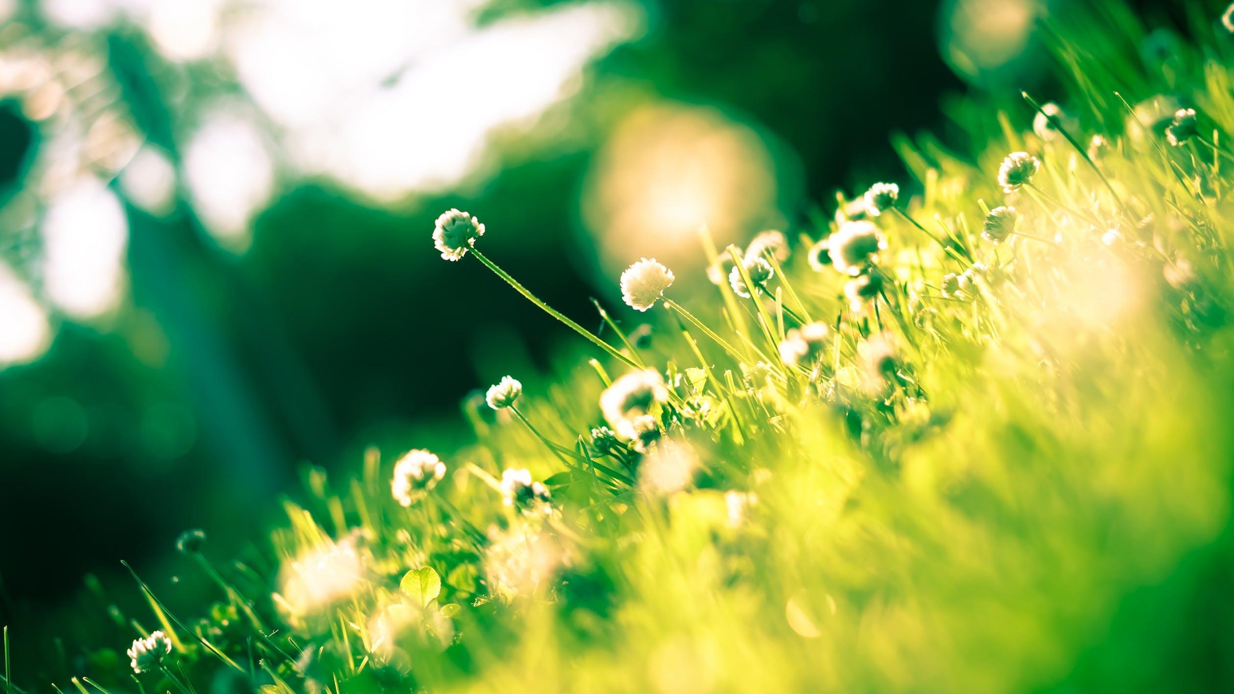 花粉症に効く食べ物や飲み物